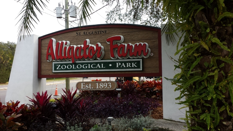 The Alligator Farm