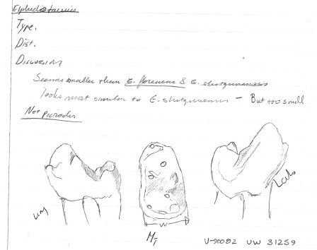 Sketches of the specimen of Elphidotarsius from The Breaks.