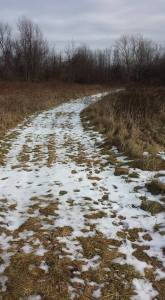 The main trail onto our land. The rest of the trails aren't nearly so clear.