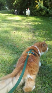 Taking Charlie for a walk during the summer.