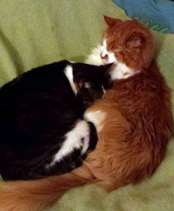 Brothers Purr
