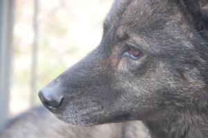 Contemplative pup.