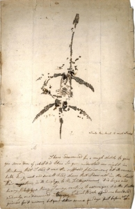Letter and drawing from Mary Anning announcing the discovery of a fossil animal now known as Plesiosaurus dolichodeirus, 26 December 1823