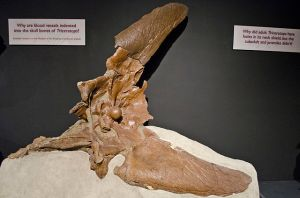 The single occipital condyle of Triceratops is that knob-looking thing right at the back of the skull. Credit: Tim Evanson CC BY-SA 2.0
