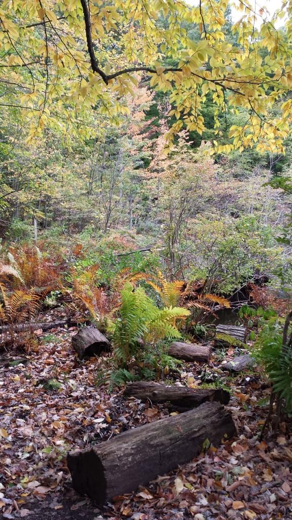 Fall at Mendon Ponds Park.
