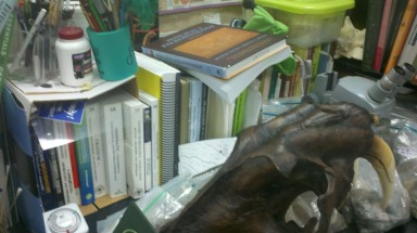 Library books with a Smilodon skull and a punch-a-saurus, too.