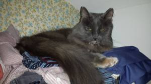 Sleeping on clean clothes is completely appropriate...