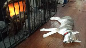 4 months. Fireplace puppy.