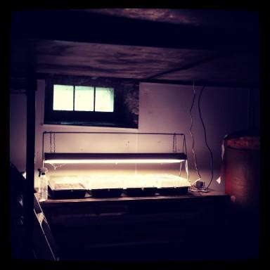 Bright spot in a dark basement.