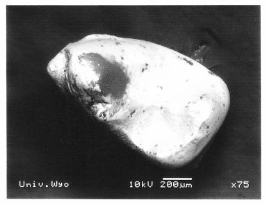 Elphidotarsius 3