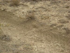 Substantially less friendly wildlife. Can you see my boot print?