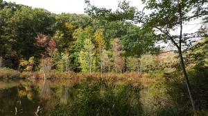 Fall colors at Mendon Ponds Park
