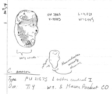 This is the Chiromyoides lower third molar. Notice where I actually compare it with Nannodectes
