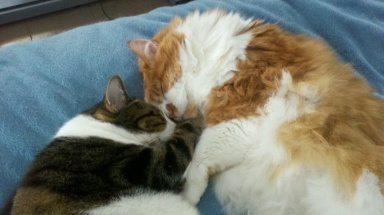 Here's Toby and Charlie having a snuggle moment.