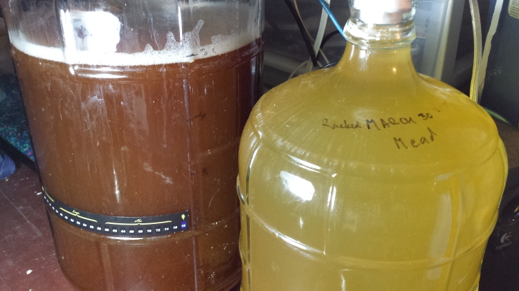 The honey weizen (left) just after being moved to the fermentation station. The yellow is the mead, which is about a month from bottling.