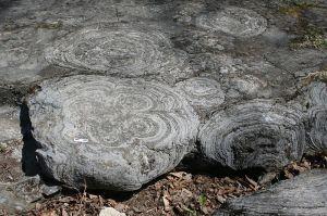 Fossil Stromatolites. Credit: Rygel, M.C. CC. By-SA 3.0