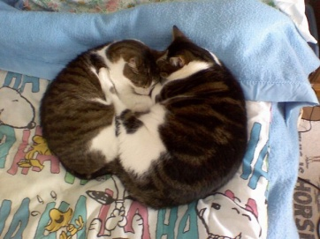 Here's Niko again (the small one) with our third cat, Toby.
