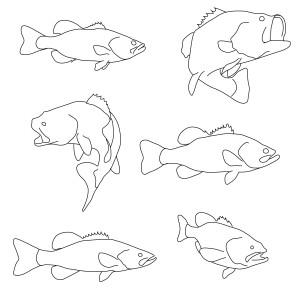 Hmmm. Fish.