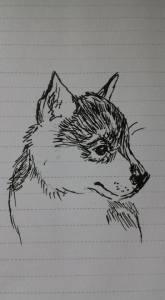First puppy sketch