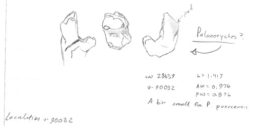 Paleoryctes from The Breaks.
