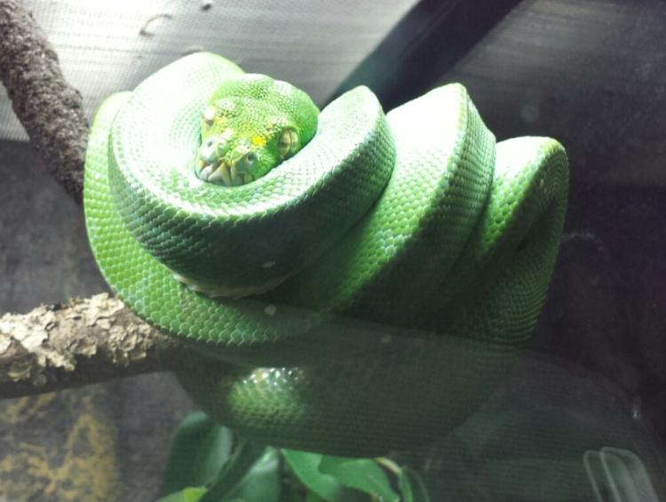 Snakey.